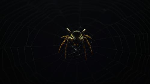 spider, insect, nature, web, dark, outdoor, night
