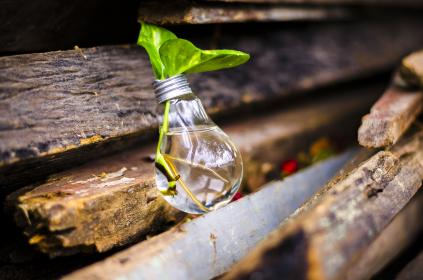 bulb, light, recycle, water, green, leaves