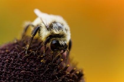 Photo of bee