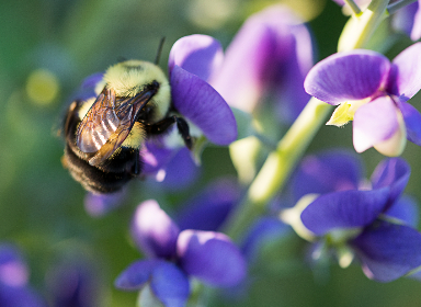 bee spring