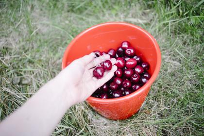 cherries bucket