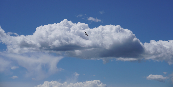 clouds bird