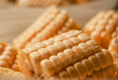 Photo of corn