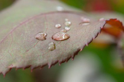 Photo of dew