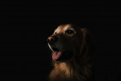 Photo of dog