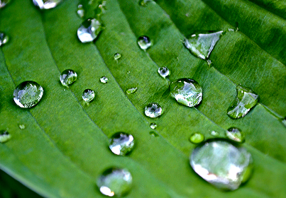droplets water