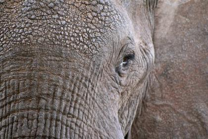 Photo of elephant