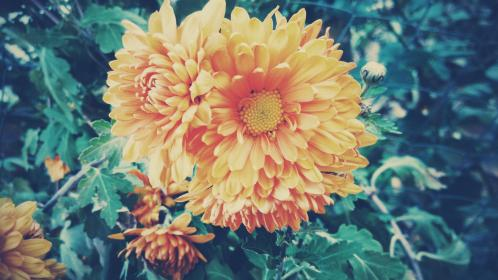 flower yellow