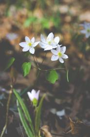 Photo of flowers