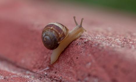 Photo of gastropods