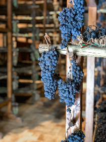 grapes drying