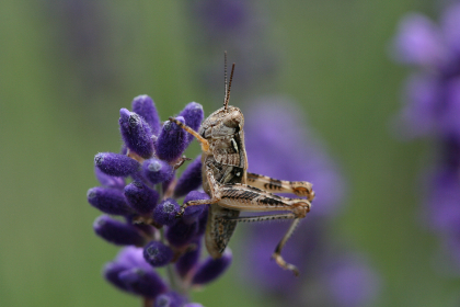 Photo of grasshopper