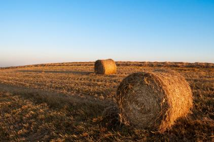 Photo of hay