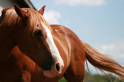 Photo of horse
