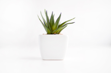 houseplant white