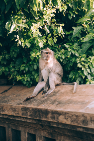 Photo of monkey