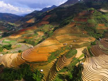 mountain ricefield