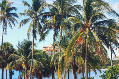 palmtrees beach