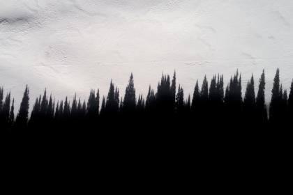Photo of pinetrees