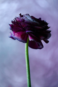 Photo of purple