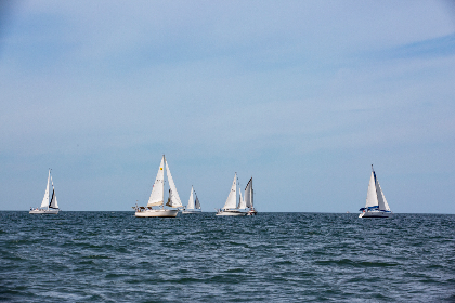 sailboats saltlife