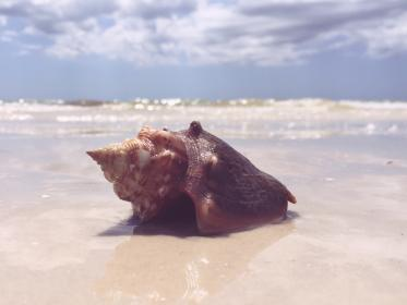 seashell beach