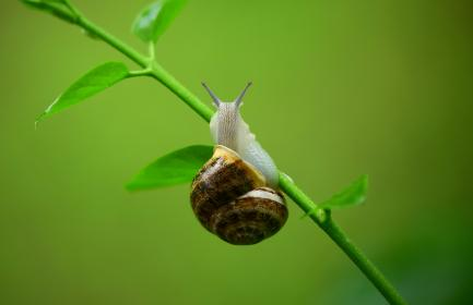 Photo of snail