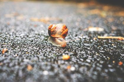 snail outdoor