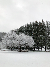 Photo of snow