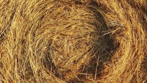 Photo of straw