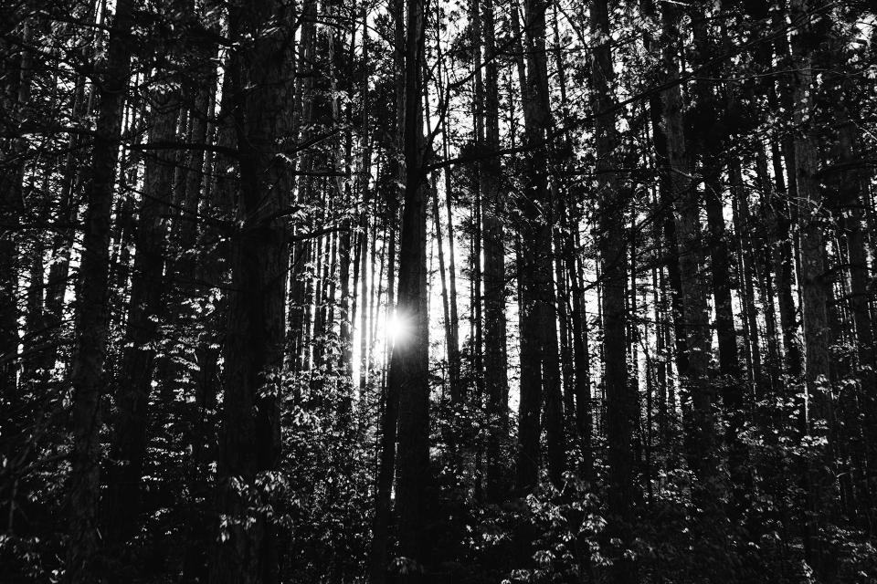 trees forest woods nature black and white