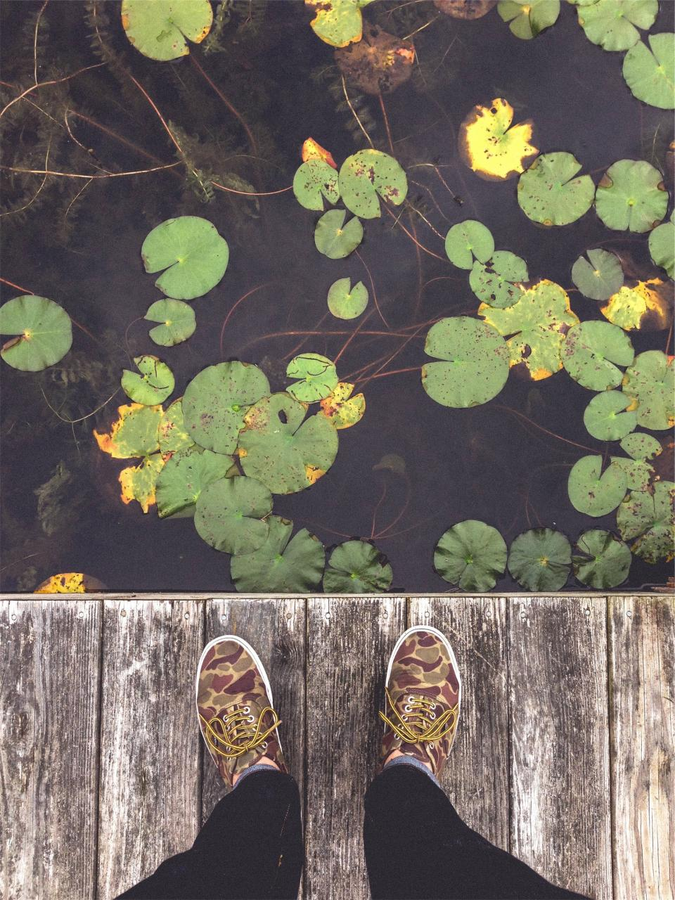 shoes laces dock lily pads lake water