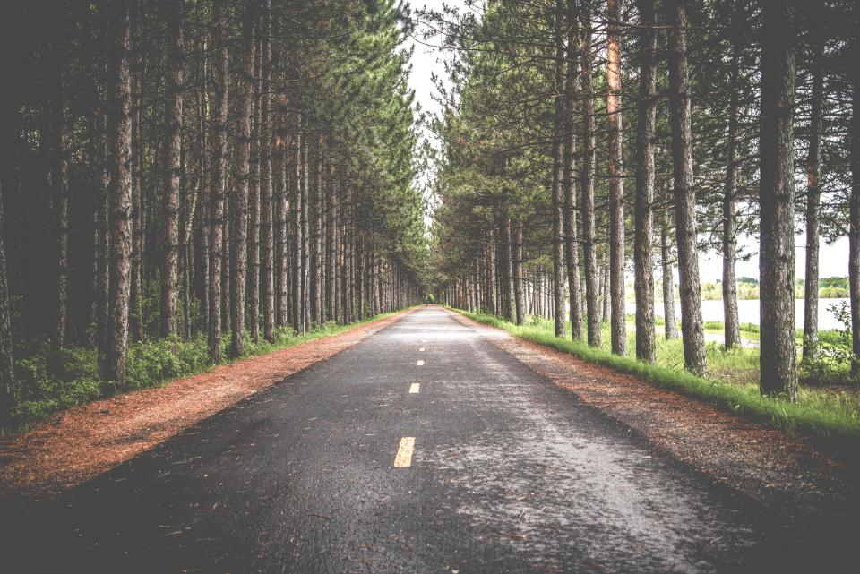 road street woods forest trees green leaves travel adventure