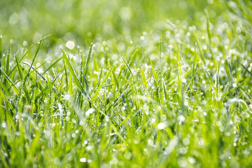 nature grass ground wet rain water droplets bokeh green