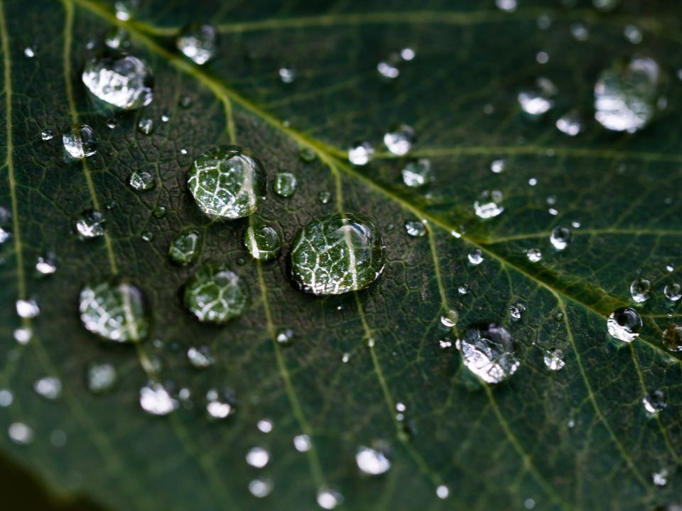 leaf green rain drops water nature droplets wet moist
