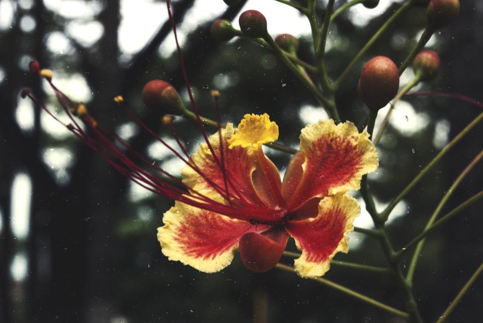 flowers nature blossoms trees fruits stems stalk branches leaves yellow red petals still bokeh