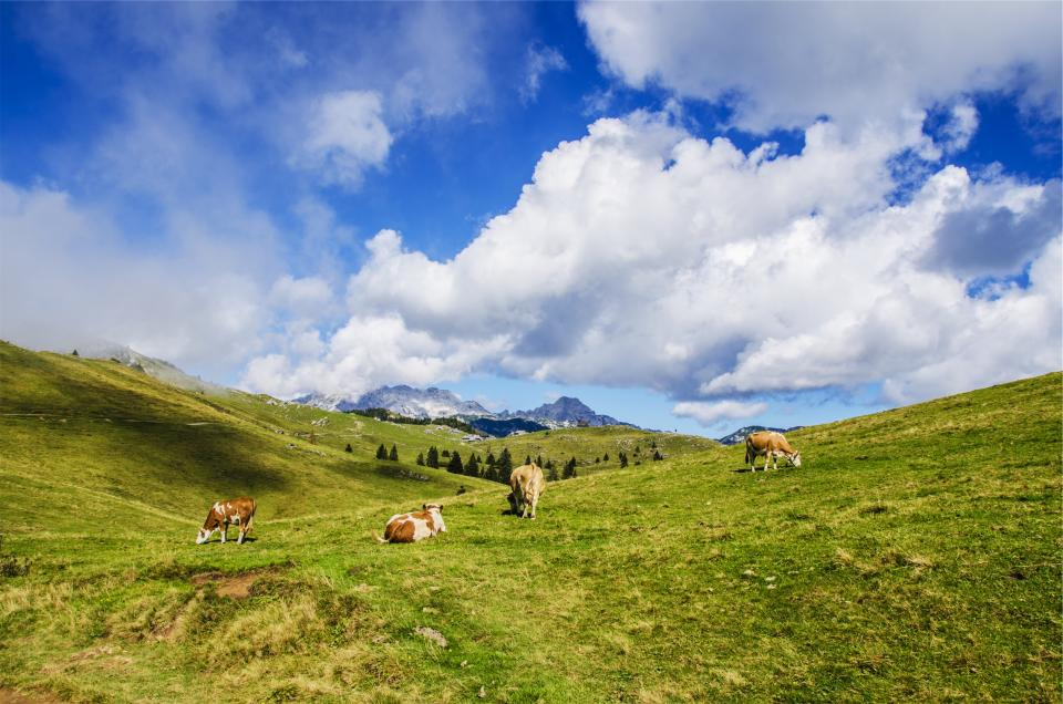 landscape green grass fields cows animals mountains hills nature clouds blue sky