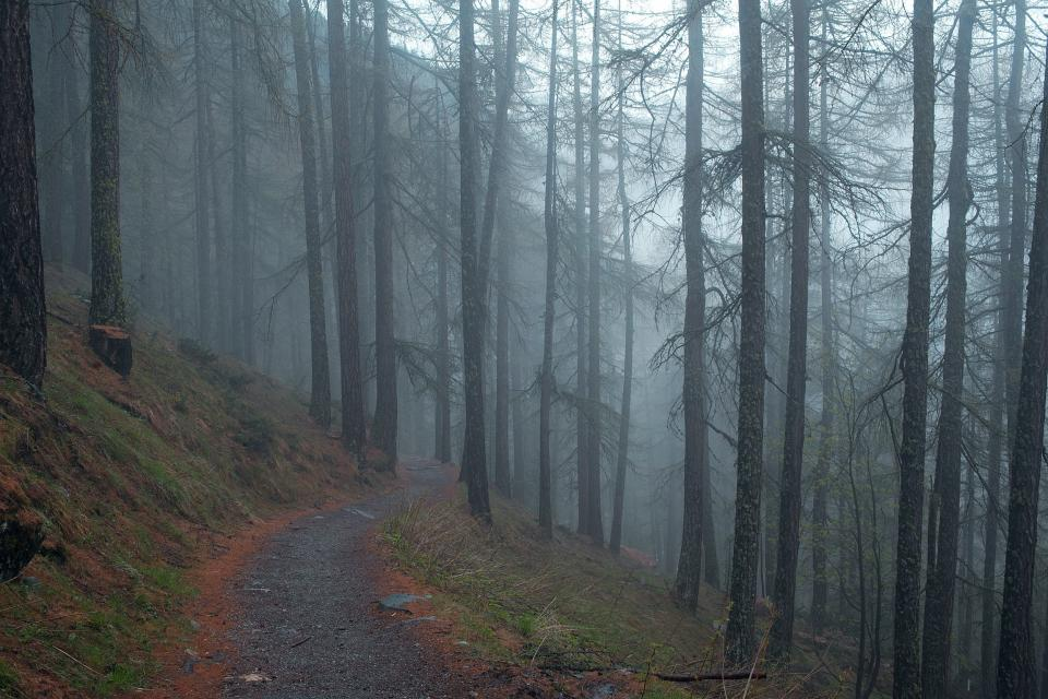 grey dark fog haze trees forest nature woods path grass leaves trail hill