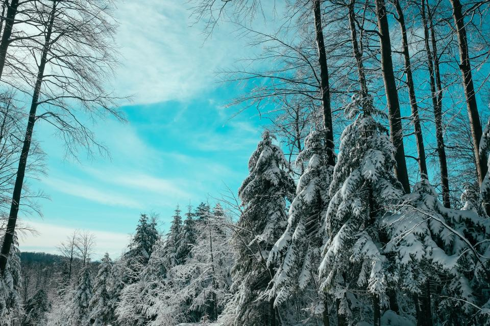 trees snow forest woods clouds sky