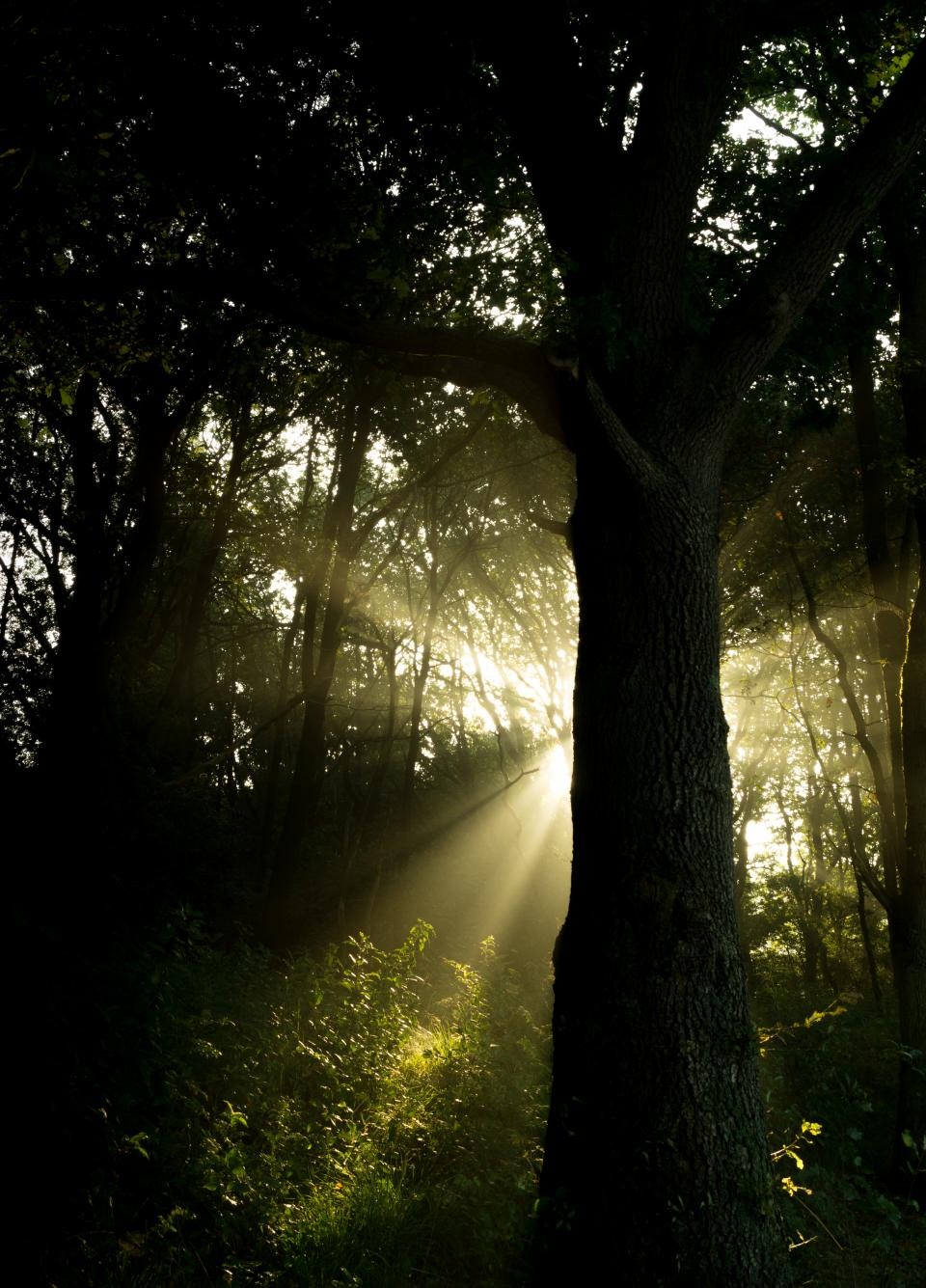 sunbeams forest woods nature trees