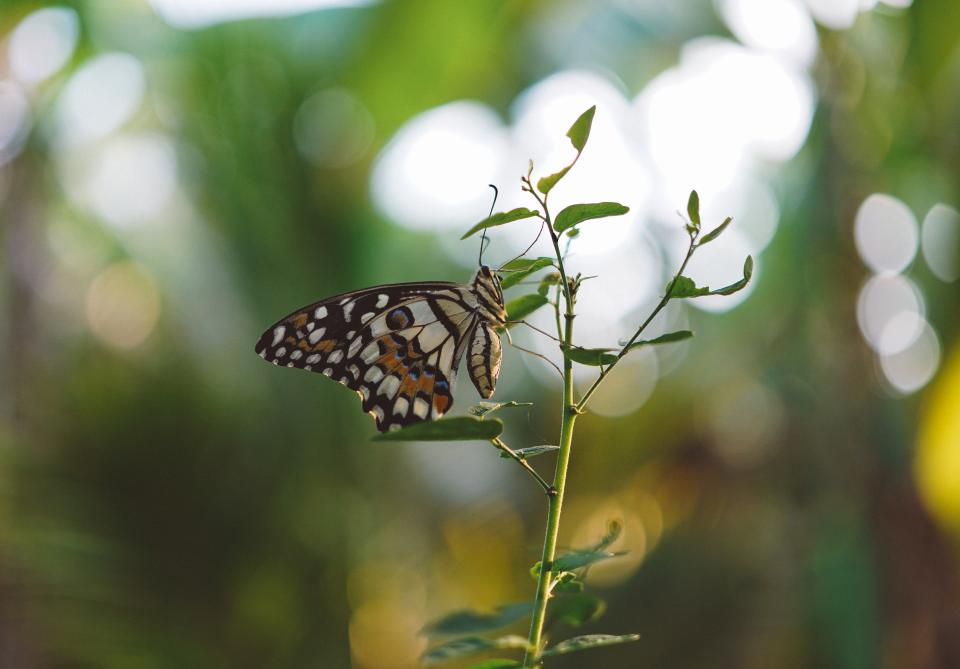 butterfly insect green leaf plant nature blur bokeh