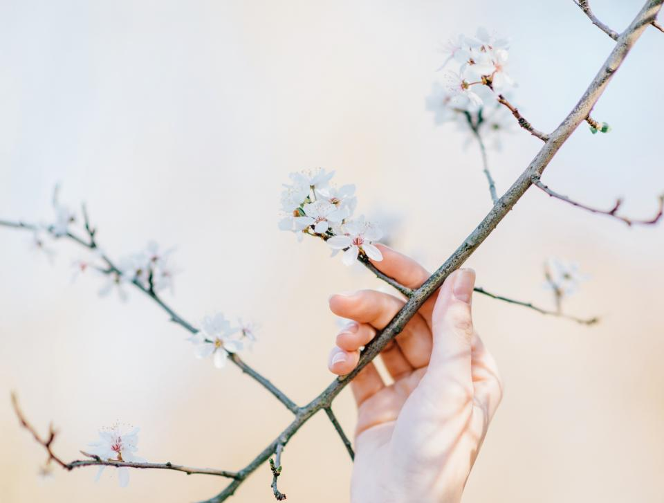 flowers nature blossoms branches white petals bokeh outdoors garden girl woman people hand
