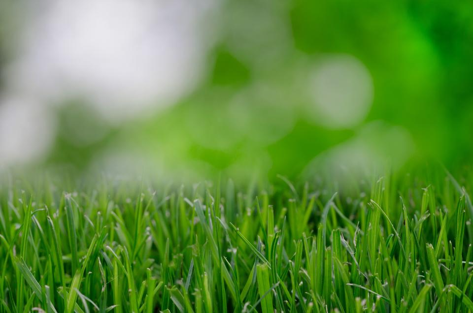 green grass nature