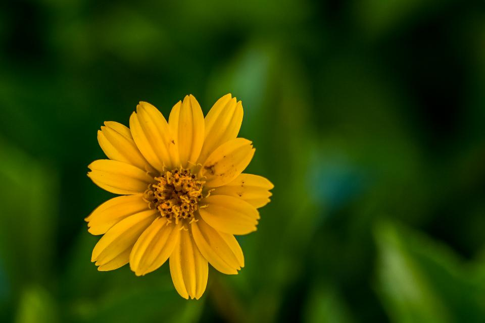 plants flower sunflower bokeh blur decor display garden yellow green bloom outdoor leaves petals