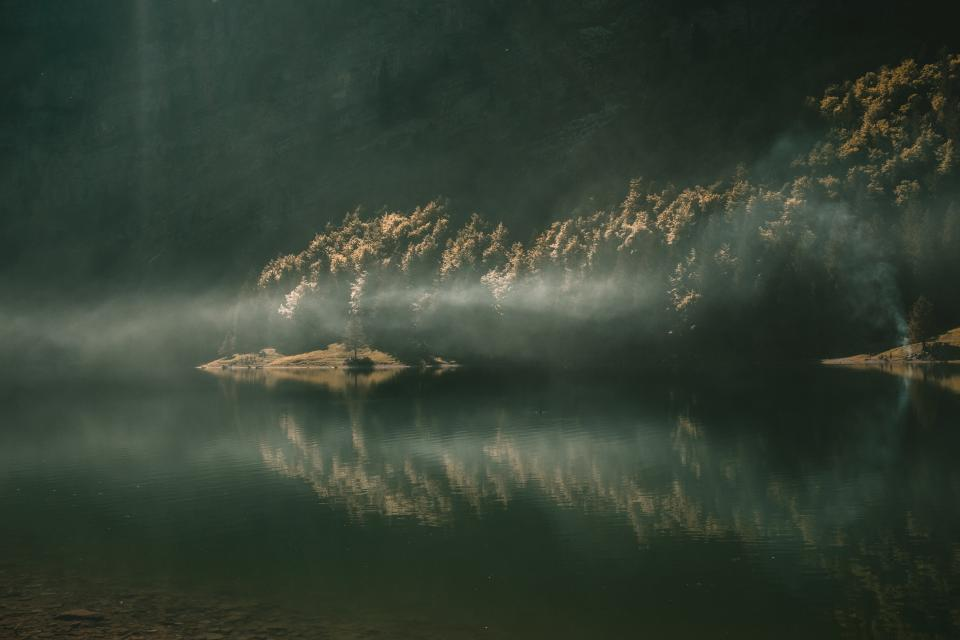 trees plants nature lake water reflection fog light