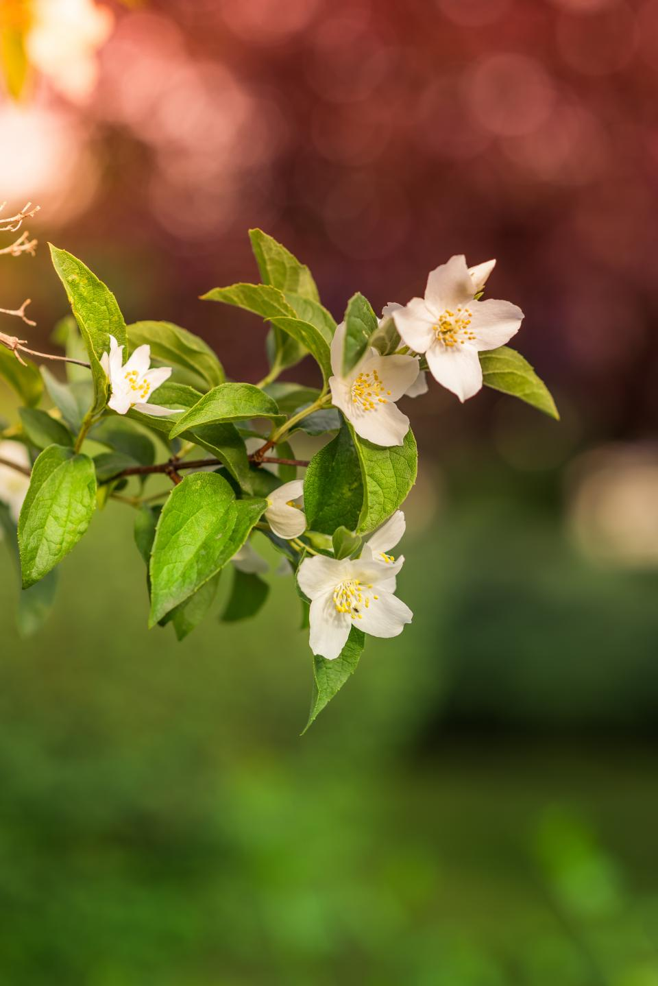 flower bloom petal nature plant blur bokeh