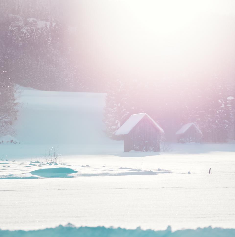 house snow plants grass tree pine sunshine sun rays nature mountain blur white