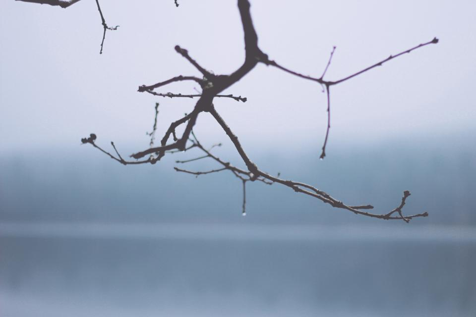 tree branch nature fog foggy