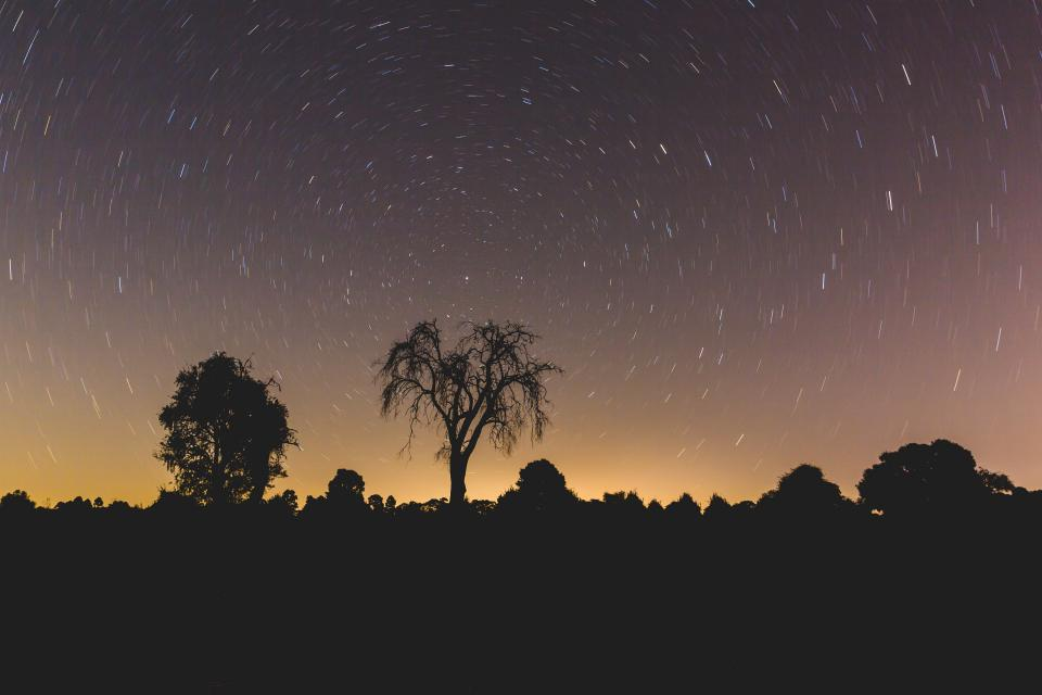 night stars galaxy trees plant nature silhouette