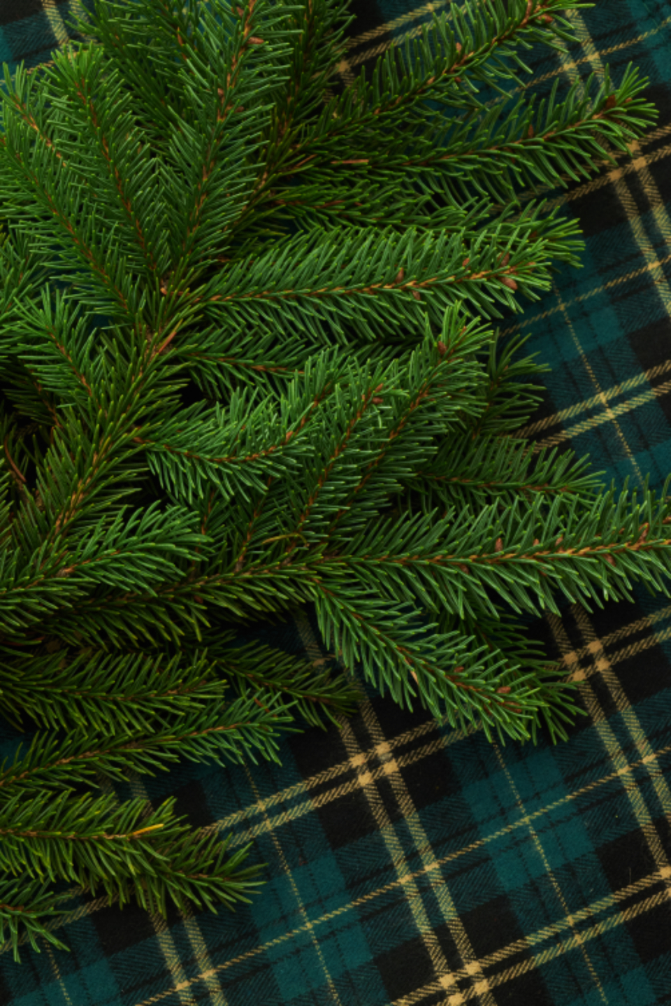 seasonal backgrounds christmas flat lay pine tree branches festive copyspace holiday merry xmas background plaid